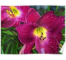 Daylily in The Rain - Rich Plum Poster