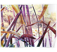 Wetland Reeds - Surreal Color Poster