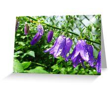 Creeping Purple Bellflower Greeting Card