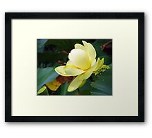 White Lotus 2 Framed Print