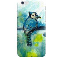 True Blue Jay  iPhone Case/Skin