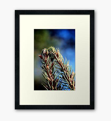 Needles Framed Print