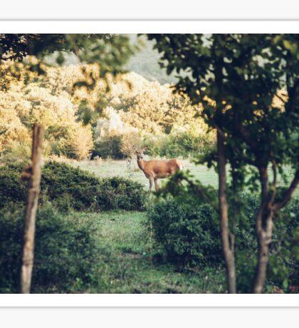 Lone Deer  Sticker