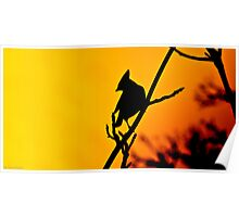 bohemian waxwing silhouette   Poster