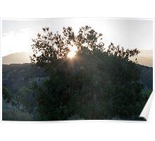 Sunrise Through A Tree Poster