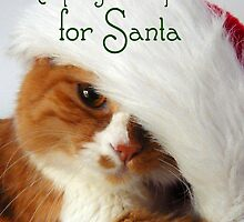 Christmas Cat Keeping an Eye Out for Santa Cat by MoMoCards