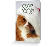 Greek Greeting - Christmas Cat in Santa Hat Greeting Card