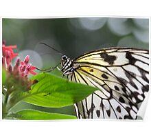 Pretty Paper Kite Poster