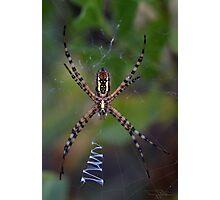 Skinny Garden Spider Photographic Print