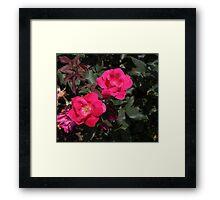 Dual Roses Framed Print