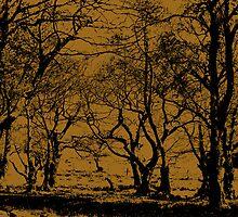 Wild Wood Dark by Rob Frith