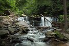 Cayuga Falls in Ricketts Glen by Gene Walls