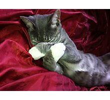 Sleeping Kitten Photographic Print