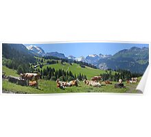 Cows above Wengen Poster