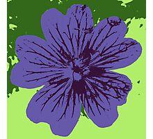 Geranium Burst Photographic Print