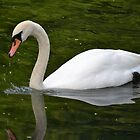 Swan by Elinor Barnes