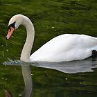 Swan by Prettyinpinks