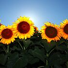 Very Sunny Sunflower by Lisa Holmgreen