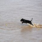 Dog playing in the sea by Elinor Barnes