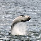 Dolphin 2 by Steve