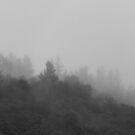 Trees in the Mist BW by elasita