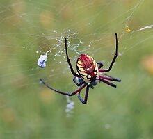 Scary Spider by Keala