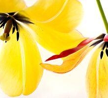 Flower Power by vertigoimages