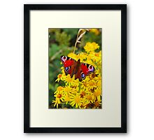 Red Butterfly on Yellow Flower Framed Print