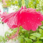 A beautiful flower by ctdgraphicx