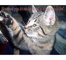 cat humour Photographic Print