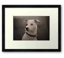 Puppy Portrait Framed Print
