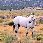 Wild Mare in Wild Flowers by Kellith