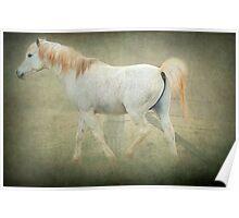 Arab Stallion Poster