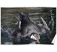 Tufted Puffin Diving Poster