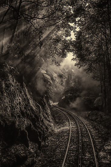 Steam and rainforest by Mel Brackstone