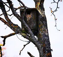 Old Birdhouse by Alex Volkoff