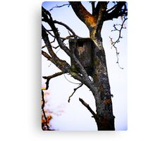 Old Birdhouse Canvas Print