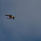 Falcon 1 by AndyG