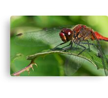 Red Dragonfly (Macro) Canvas Print