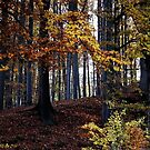 Autumn forest by RosiLorz