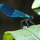 Blue Dragonfly by Thomas Gelder