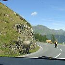 Encounter on the Alpine Road by Ellanita