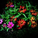 LIGHT PAINTING WITH FLOWERS by Diane Peresie