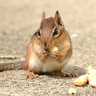 Chipmunk (iPad Case) by William Brennan