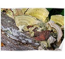 Polypores, Leaves and Lichens Poster