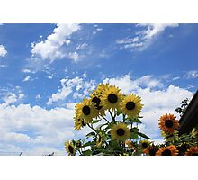Afternoon Sunflowers Photographic Print