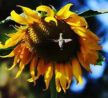 Hummingbird and Sunflower by SANDRA BROWN
