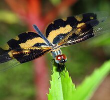 """""""Close to a dragon fly"""" by debjyotinayak"""