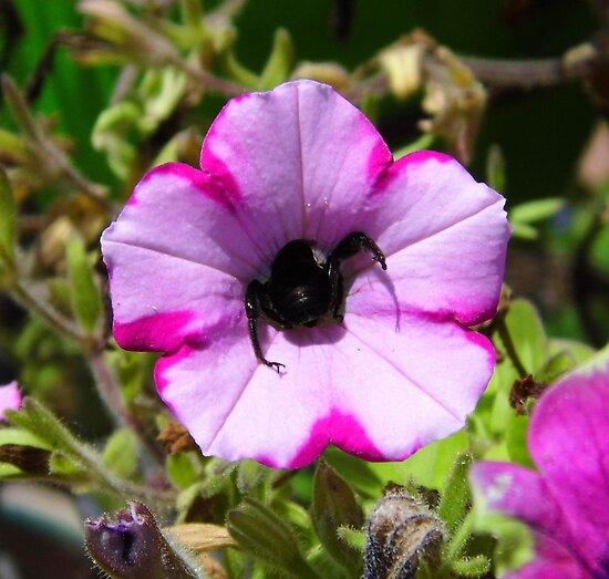Bee Butt by WildestArt