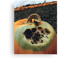 Rotting Halloween Pumpkin Canvas Print